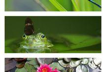 nature units