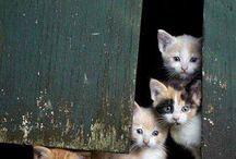 Cute Kittens  / Sooooo Cute:)))))