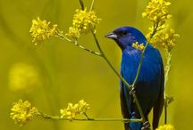 uccelli singoli