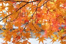 Frühling, Sommer, Herbst & Winter