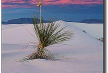 deserted / Deserts