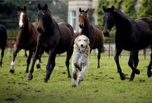 True Partners - Dogs & Horses / Dogs & Horses are just meant to be together - the perfect partnership - don't you think?
