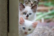 is this the three musketeers ??