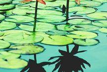 flowers, bouquets, herbs, things that grow. / by Beth Noel