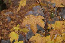 otoño / cositas relacionadas con el otoño