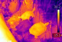 Curiosidades termográficas / Termografías de cosas curiosas cotidianas. ¿Quieres saber cómo se ven las cosas en el infrarrojo?