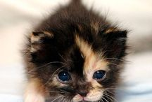 Cute! / by Jennifer Watson