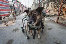 Protection animale en Chine par CHERKI
