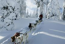 Winter wonderlands - so crisp