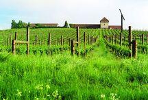 Great Vineyards in America