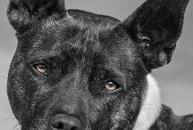 Who's A Good Boy? / I love dogs!!!
