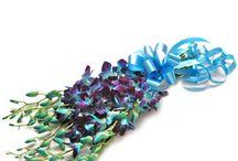 Orchid Flower Arrangements / Best orchid flower arrangements in vase arrangement and bouquets.
