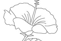 Flower Coloring Pages / Download Free Printable Flower Coloring Pages for your coloring collection