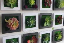 Растения и композиции
