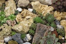 kövek és növények