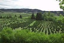 My tree farm