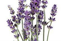 kedvenc virágok képei