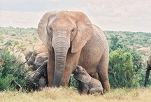 Addo Attractions...