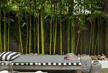 balkon taras ogród