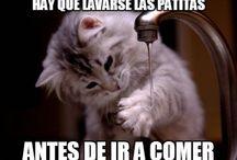 Gatos con frases / Aquí encontrarás imágenes de Gatos con Frases.