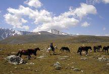 L'Altaï / L'Altaï est originaire de Russie, il est connu sous le nom Altaïskaya. Même si les origines de cette race sont incertaines, l'Ataï est très proche physiquement et géographiquement du cheval Mongol.