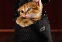 Kitten Caboodle / Kitten Carry-on or Carry-in?