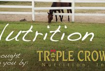 OTTB Care and Nutrition / Articles about care and nutrition for the off-track Thoroughbred.