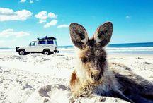 Bribie Island 4WD Tours