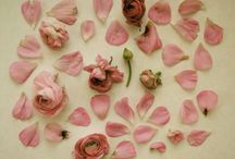 beauty in petals
