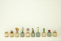 Any a plant / by Cintya Larasinta