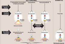 ACH receptors