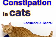 Cat health issues / The good and bad of feline health. Guides, articles, discussions and more.