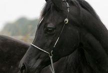 horse..s