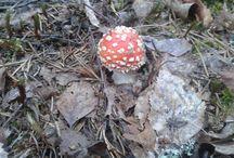Sienet - Mushrooms