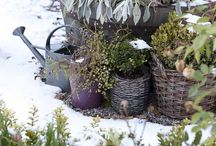 winter porches and gardens