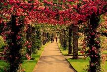 Natureza...Jardins