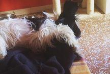 Gea e Skye / La mia famiglia animale