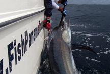 Panama Fishing Reports / by Sport Fish Panama Island Lodge  www.fishpanamatoday.com