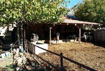 Village Life in Turkey - Dorfleben in der Türkei / Wir zeigen Ihnen, wie die Menschen in den türkischen Dörfern leben, ganz traditionell im Einklang mit Tier und Natur. Du möchtest die Türkei gern ursprünglich erleben? Besuche unsere Webseite auf www.lykia-guide.de!