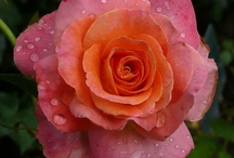 Pink & Orange