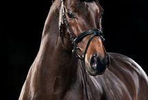 Horses gorgeous