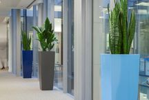 Interior Plants / Here are some interior plants we provide