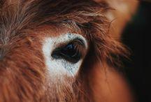 Donkey and Mule Photos