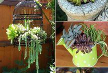 Kaktusíky