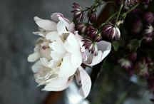 Flower / by Livia Rocha