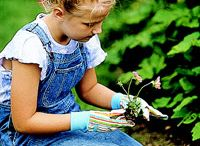 gardening ideas / by Rachel Evanow