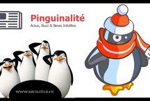 Pinguinalité Insolite / Toute l'actualités buzz et insolite de la pinguinalité de Maelys Taillant ! Et bien entendu les imitateurs .. !