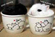 Mugs / DIY mugs