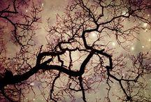 Nature's Beauty via Photography-Night