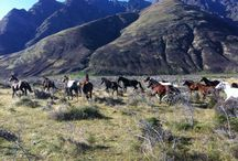 Walter Peak High Country Farm / Situated on picturesque Lake Wakatipu's south-western shores, Walter Peak High Country Farm is the perfect place to spend a relaxing few hours on a visit to Queenstown